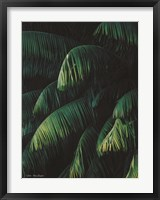 Framed Palm Leaves