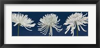 Framed Morning Chrysanthemums V Dark Blue