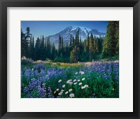 Framed Mount Rainier