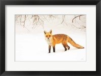 Framed Red Fox IV