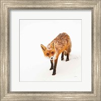 Framed Red Fox II