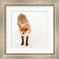 Framed Red Fox I