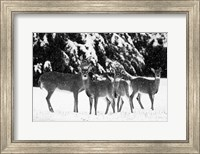 Framed Herd