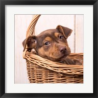 Framed Puppy in a Basket