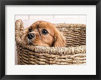 Framed Puppy in a Laundry Basket