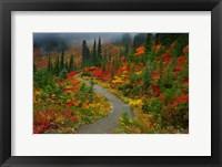 Framed Foggy Trail, Mt. Rainier