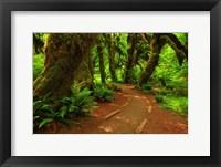 Framed Hoh Rainforest, WA