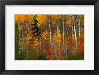 Framed Wenatchee National Forest, WA