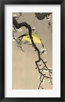 Framed Chinese Wielewaal on Plum Blossom Branch, 1900-1910