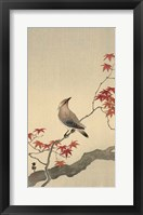 Framed Japanese Waxwing on Maple, 1900-1936