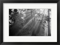 Framed In a Haze