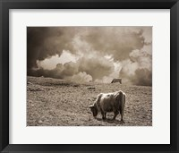 Framed Scottish Highland Cattle No. 1
