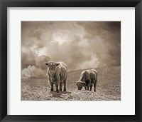 Framed Scottish Highland Cattle No. 2