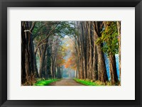Framed Acacias in Autumn