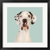 Framed Daeaa the Great Dane