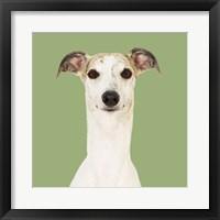 Framed Dogs Hugo the Whippet