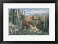 Framed Grizzlies Domain