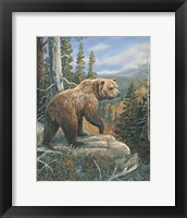 Framed Grizzlies Domain 2