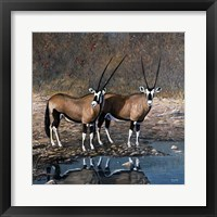 Framed At The Waterhole