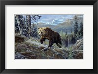 Framed Over The Top Grizzly