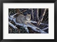 Framed Snow Moon Lynx
