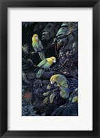 Framed Yellow Headed Amazons