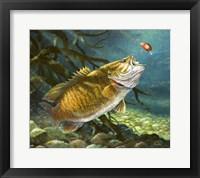 Framed Deep Water Prowler