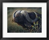 Framed Caped Buffalo