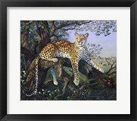 Framed Leopard's Domain