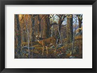 Framed Lost Valley Buck