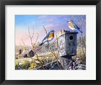 Framed Old Homestead Bluebirds