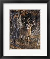Framed Deer Nibble
