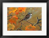Framed Whitethroated Sparrow