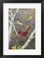 Framed Cardinals In Birch