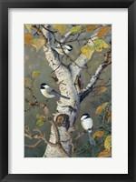 Framed Chickadees In Birch