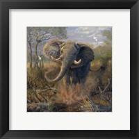 Framed Angry Tusker