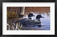 Framed Beaver Pond Loons
