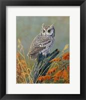 Framed Bright Eyes Screech Owl