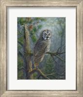 Framed Gray Dawn Owl