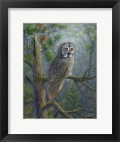 Framed Gray Dawn Owl