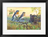Framed True Blue Bluebird