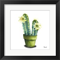 Framed Cactus Flowers II