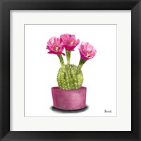 Framed Cactus Flowers V