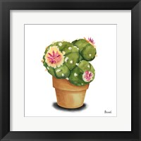 Framed Cactus Flowers VII