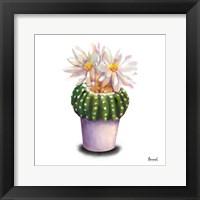 Framed Cactus Flowers IX