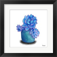 Framed Turquoise Succulents I
