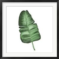 Framed Leaves of the Tropics I