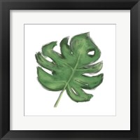 Leaves of the Tropics II Framed Print