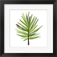 Leaves of the Tropics III Framed Print