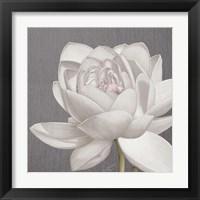 Framed Vintage Lotus on Grey II